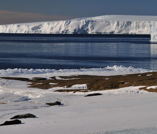 Weddell Seals and , Adelie Penguins on the ice edge in East bay from Petes Window