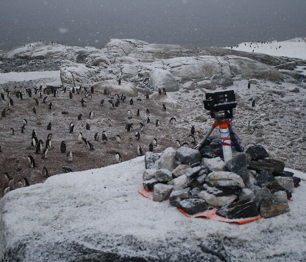 An automated camera sits on top of rocks overlooking an Adelie penguin colony near Australia's Casey station.