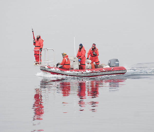 Whale tagging team of four in small boat