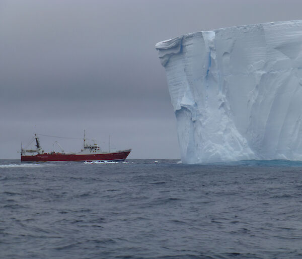 The Amaltal Explorer is dwarfed by a tabular iceberg during the Antarctic blue whale voyage
