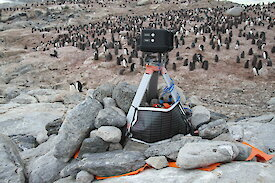 A remote camera above an Adelie penguin colony on Shirley Island near Casey.