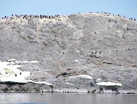 Approaching the penguin colony