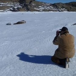 Several Weddell Seals being photographed on the sea ice