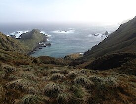 Looking from a high vantage point down the rugged tussock covered slopes to Caroline Cove and Caroline Point