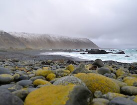 View along West Beach — taken from a low position showing in the foreground, the lichen covered pebbles above the high tide mark and the snow covered slopes of the escarpment in the background