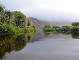 Reflections in a wallow pond near the science building on station. The view is towards the south and one of the Magnetic quiet zone huts can be seen in the distance, while reflections of the tussock can be seen on both sides of the pond and the distant mist shrouded escarpment in the background
