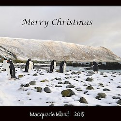 Merry Christmas from all at Macca. Image shows gentoo penguins on a snow covered bubbly beach with the heavily snow covered escarpment in the background and the words 'Merry Christmas' written on sky and 'Macquarie Island 2013' written on a black border below the picture
