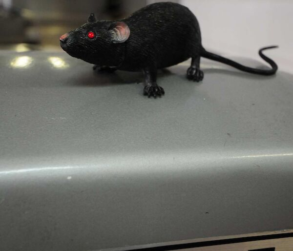 Plastic rat placed on top of a silver case with a sticker readingHobart
