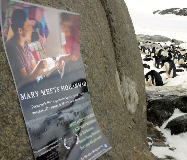 Film poster stuck to a rock surrounding by penguins