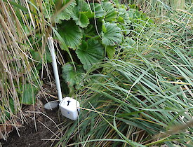 Pit fall trap dug with soil corer, and temperature gauge with covering