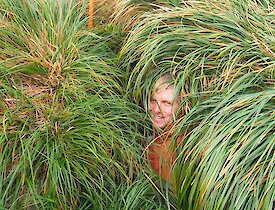 A man barely visible deep in the tussocks