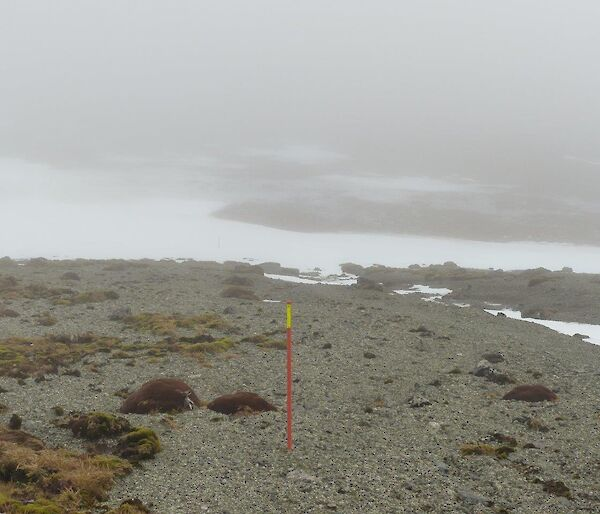 An orange track marker visible in the fog of the track