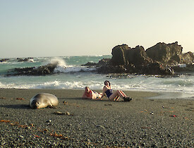 A young elephant seal joins in the Midwinter swim — Ranger Chris and Doctor Cathryn enjoy the sun with him
