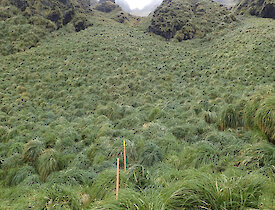 Dense tussock covers the entire bottom half of the Far North Precarious Bay Jump Down