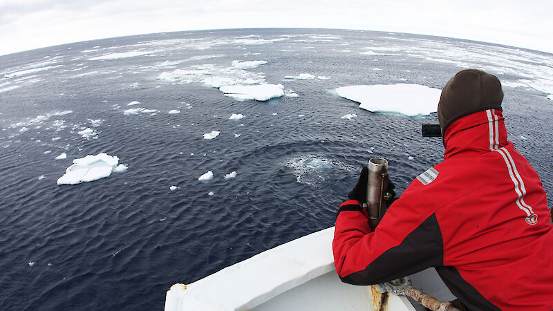 Scientists at work spotting whales in the Southern Ocean