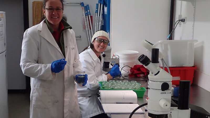White coated scientists in the laboratory