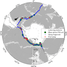 A map showing the location of listening stations conducted during two legs (Hobart to Punta Arenas and Punta Arenas to Cape Town) of the Antarctic Circumnavigation Expedition. The red crosses show where full song was recorded and indicate that individual Antarctic blue whales were in close proximity to the listening station. The green area indicates that calls from aggregations of blue whales were detected and located within 300km of the listening station. The Mertz Glacier region is due south of Tasmania and the Ross Sea hotspot is identifiable by the large area of red crosses.