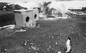 Penguin and Clothes Drier, Davis Station 1993