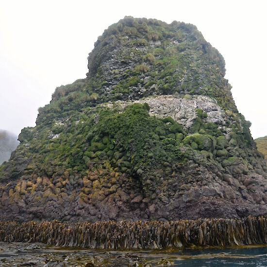 Rock stack with kelp