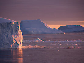 The sky is pink behind the white icebergs in this photo>