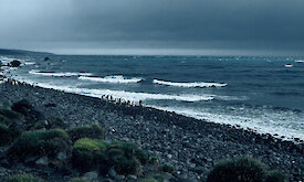 Stormy grey skies, rough sea that crashes onto a rocky shore with penguins.