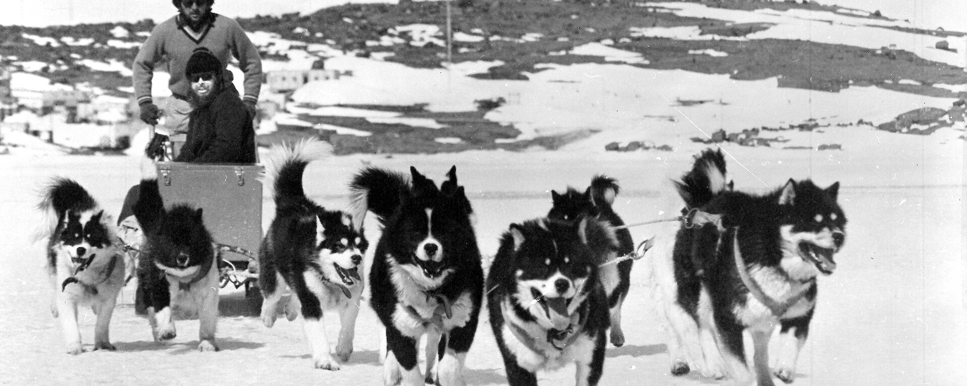Black and white photo of expeditioner driving team of huskies towards camera.