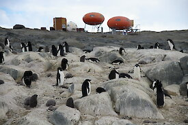 Adélie penguins on rock nests in foreground with two large orange pill-shaped huts at rear.