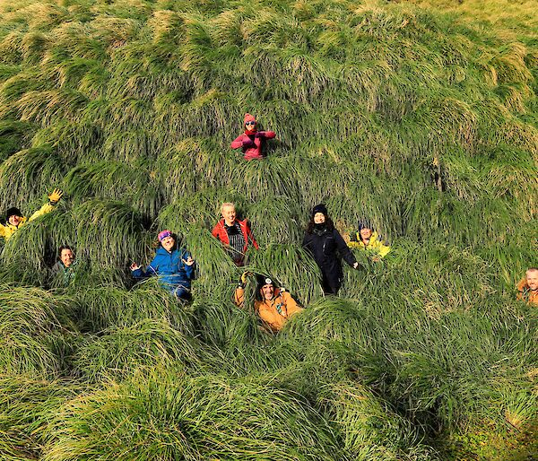 Nine brightly dressed people are standing in the grassy tussocks of Macquarie Island