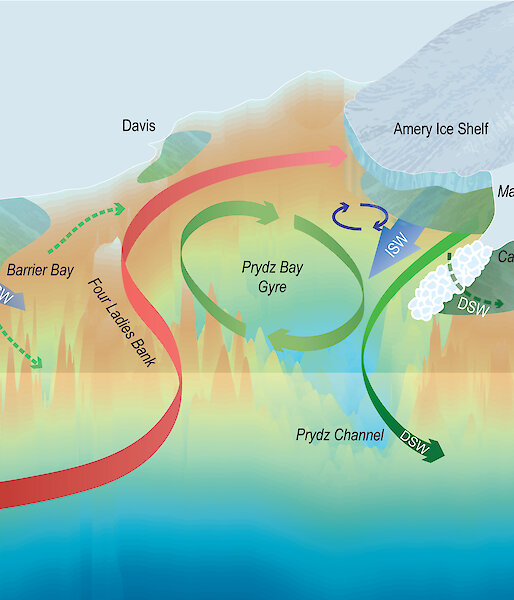 Graphic showing the formation of dense shelf water in Prydz Bay.