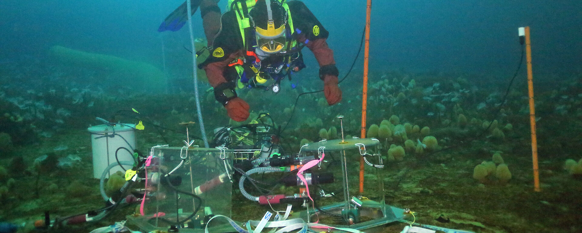 A diver installs a mini-chamber under the sea ice for ocean acidification experiments.
