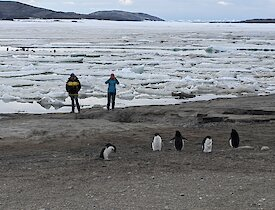 Two women photograph a group of penguins