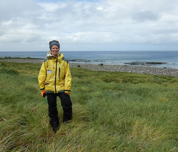 Female scientist stands in the grass near a king penguin colony on Macquarie Island.
