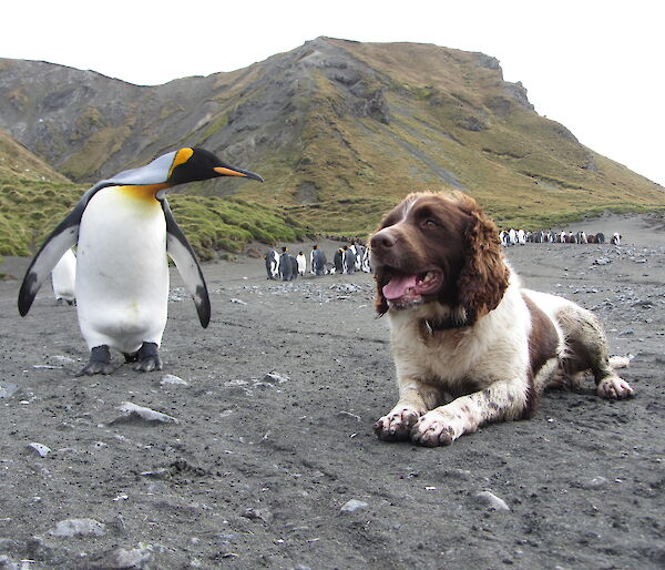 a dog is lying next to a penguin on the beach