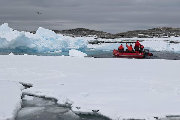 Four expeditioners in a dinghy on the icy water.  One expeditioner is waving to a bird in the sky.